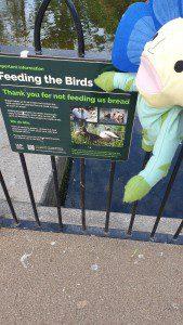 feed birds board